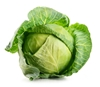 Picture of Cabbage - Green