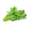 Picture of Coriander - fresh