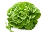 Picture of Lettuce - butter