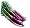Picture of Spring Onion - Red