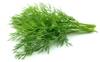 Picture of Dill