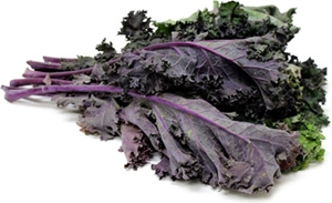 Picture of Kale - Red Russian