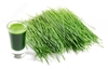 Picture of Wheatgrass - 200g