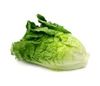 Picture of Lettuce - Green Cos Head