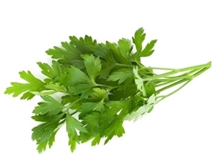 Picture of Parsley - Italian flat leaf