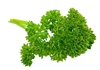 Picture of Parsley - Moss Curly Parsley