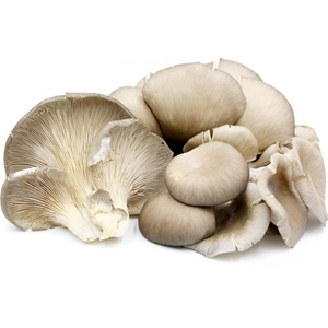 Picture of Mushrooms - Oyster